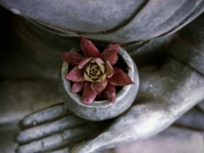 Instructor/a de Mindfulness y Meditación